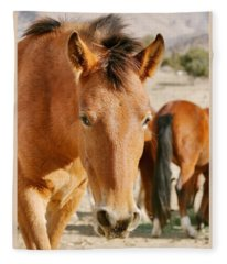 Curious Mustang Fleece Blanket