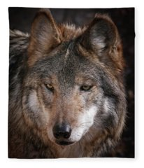 Curious Sancho Fleece Blanket