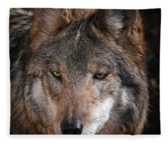 Curious Sancho Fleece Blanket