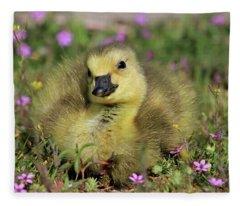 Daydreamer Fleece Blanket