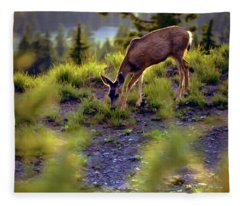Deer At Crater Lake, Oregon Fleece Blanket