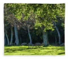 Deer In The Afternoon Sun Fleece Blanket