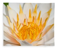Delicate Touch Fleece Blanket