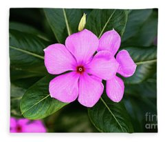 Desert Rose Asian Flower Fleece Blanket
