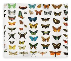 Different Illustrated Types Of Butterflies And Moths Fleece Blanket