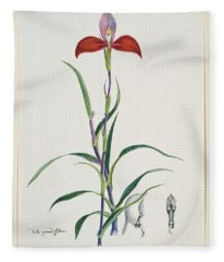 Disa Uniflora Bergius Red Disa Or Pride Of Table Mountain, Robert Jacob Gordon, 1777 - 1786 Fleece Blanket