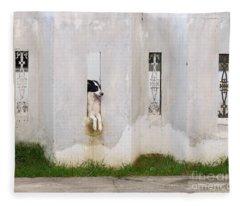 Dog Watching Fleece Blanket