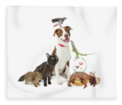 Domestic Pets Group Together With Copy Space Fleece Blanket