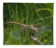 Dragonfly 7 Fleece Blanket