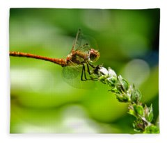 Dragonfly Sitting On Flower Fleece Blanket