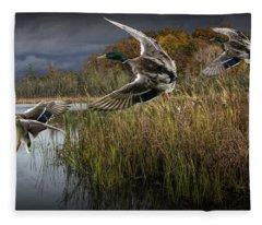 Drake Mallard Ducks Coming In For A Landing Fleece Blanket