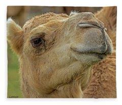 Dromedary Or Arabian Camel Fleece Blanket