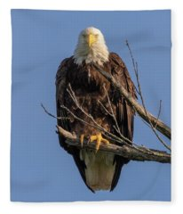 Eagle Stare Fleece Blanket