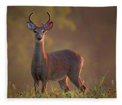Early Buck Fleece Blanket