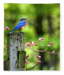 Eastern Bluebird Fleece Blanket