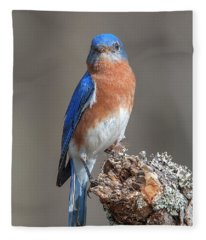 Eastern Bluebird Dsb0300 Fleece Blanket
