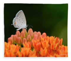Eastern Tailed Blue On Butterfly Weed Fleece Blanket