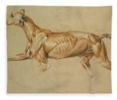 Ecorche Drawing Of A Whippet  Fleece Blanket
