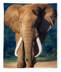 Elephant Approaching Fleece Blanket