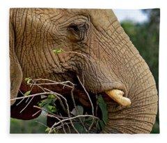 Elephant Curl Fleece Blanket