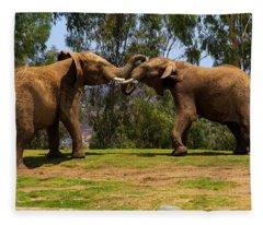 Elephant Play 3 Fleece Blanket