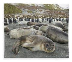 Elephant Seal Weaner Pups Fleece Blanket