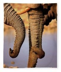 Elephant Trunks Interacting Close-up Fleece Blanket