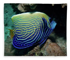 Emperor Angelfish, Red Sea 1 Fleece Blanket