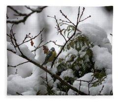 Eurasian Blue Tit In Winter Fleece Blanket