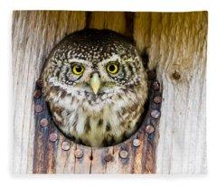 Eurasian Pygmy Owl Fleece Blanket