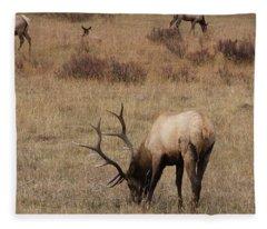 Faabullelk114rmnp Fleece Blanket