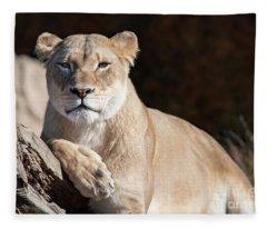 Fall Lioness Fleece Blanket