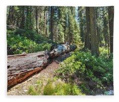 Fallen Tree- Fleece Blanket