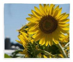 Farm Sunshine Fleece Blanket