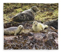 Farne Island Seals Fleece Blanket