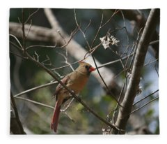 Female Cardinal 3 Fleece Blanket