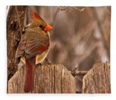 Female Cardinal On The Fence Fleece Blanket