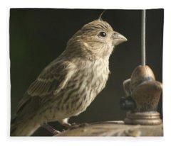 Female House Finch On Feeder Fleece Blanket
