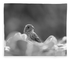 Female House Finch Perched In Black And White Fleece Blanket