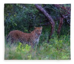 Female Leopard At First Light Fleece Blanket