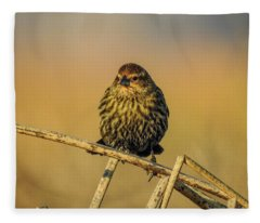 Female Red-winged Blackbird  Fleece Blanket