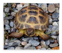 Female Russian Tortoise Fleece Blanket