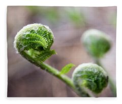 Fiddleheads Fleece Blanket