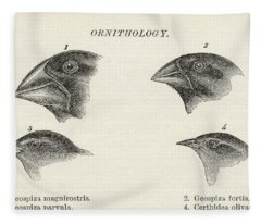 Finches With Beaks Adapted To Different Fleece Blanket