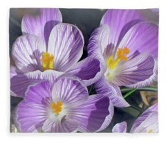 First Crocuses On The Sunny Side 6 Fleece Blanket