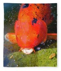 Fish Surprise Fleece Blanket