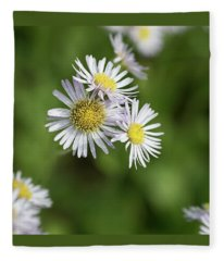 Fleabane, Erigeron Pulchellus - Fleece Blanket
