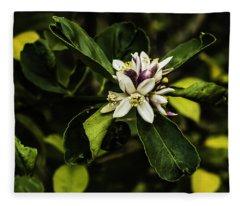 Flower Of The Lemon Tree Fleece Blanket
