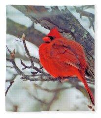 Fluffed Up Male Cardinal Fleece Blanket