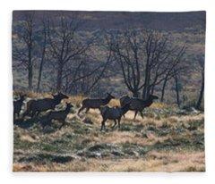 Follow The Leader - Elk In Rut Fleece Blanket